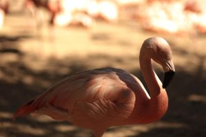Pink Flamingo by The-Underwriter