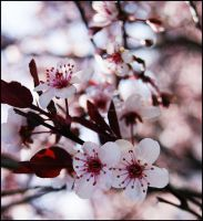 Sweet Pink Blossoms 3 by GrotesqueDarling13
