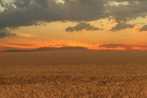Golden Bulgaria by vladovg