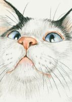 ACEO Cross Eyed Cat by bigcatdesigns