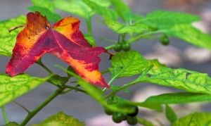 First sign of fall by Roland3791