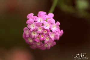 flower ball. by MartinaPhotography