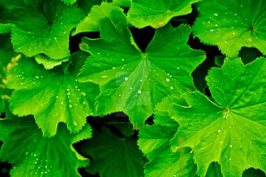 Green with Drops by darrensmith016