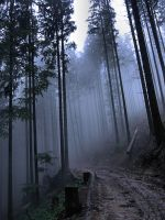 Carpathian Forest by endriane