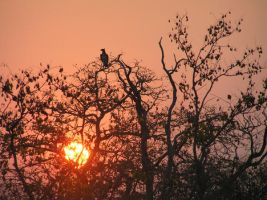 Eagle in African bush by AnaturiStinza