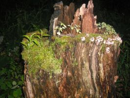 Overgrown stump by luethlover