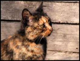 441 by evy-and-cats