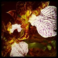 Orchids in my Garden by MudgetMakes