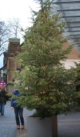 christmastrees in cologne by ingeline-art