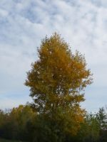 Autumn tree in the cloud by A1Z2E3R