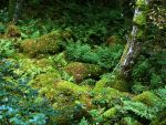 forest 31 by Pagan-Stock