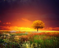 sunset tree I by BaxiaArt
