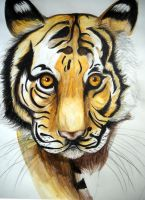 Unfinished Tiger by caitlin-soulia