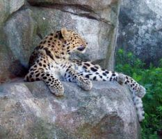 Leopard 2 by PlaidRed