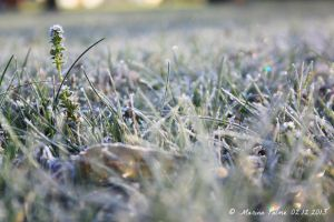 Chilly december morning. 2 by MarinaPalme