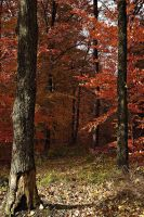 Red Trees by Egdyl