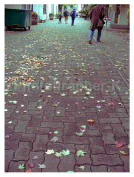 Fallen Leaves by Photographer-K