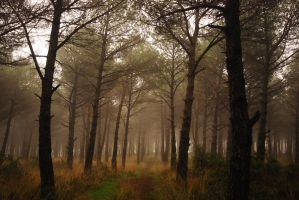 foggy trees by chirkhef-stock