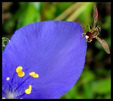 Flower with Bee by bamako