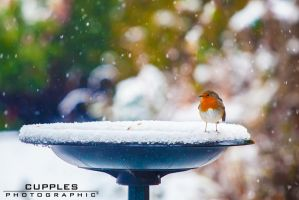 Robin in the Snow by cupplesey