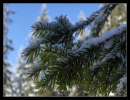 A winter's tale 3 by 99-in-the-shade