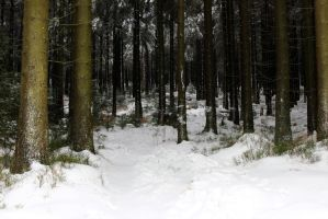 forest 63 by Pagan-Stock