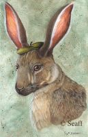 Jackrabbit with beret by Seaff