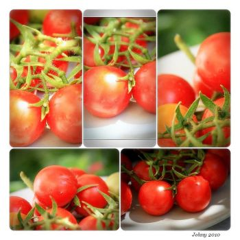 Tomatoes I by sounds-and-colors