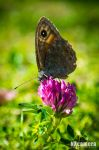 Butterfly by NXcamera