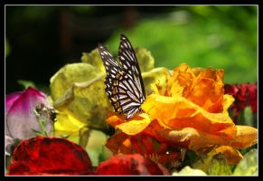 Butterfly and a flowerbed by Purtsi