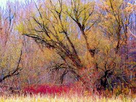 Shades of Autumn 11 by MadGardens