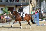 Young Riders Hunter Test - Bay Mare by LuDa-Stock