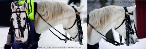 Hungarian Bridle 2 by Colourize-Stock