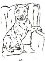 Chubby pit bull/Amstaff by JackRussellVenom