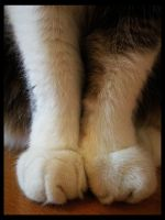 Fluffy Paw by cherrykiiss