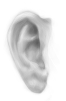 Ear Practice by blayzeon