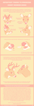 helpful things to remember about deer! by VCR-WOLFE