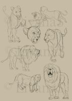 Sketchtime: Lions by LivanaS