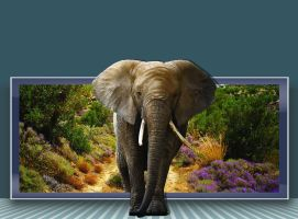 Elephant Out of bounds 2 PSD by wsaconato