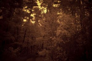 Interesting Forest and day by simaso