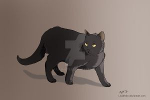 Black Cat by LissiKete