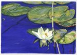 Water Lily by h-i-l-e-x