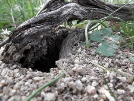 Ant Hole by WolfClaw419