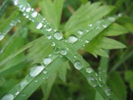 Grass and raindrops by NastasiaHands