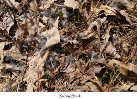 Forest ground texture 3 by Rainny-Stock