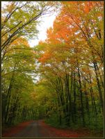 Rustic Road by papatheo