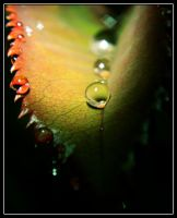 Raindrops by absent-of-all