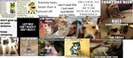 funny cat/dog puns and funny quotes by dandanfuntime12