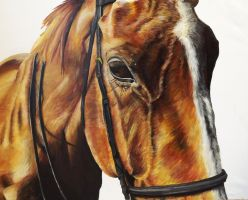 Horse Portrait by bunnyrabb567