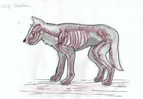Wolf Anatomy: Skeleton by Tebyx